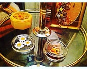 Preserved Nature, Daisies & Butterfly enclosed in clear casting Resin, Round Coasters. Bohemian Home/Table Decor.