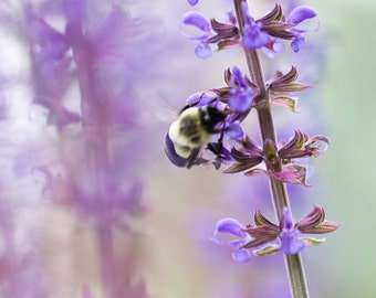 Bumblebee and Lavender Photograph - fine art photography, garden art decor, botanical art, flower nature, purple green wall art, macro