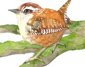 Wren No.1, Archival Print of Original Watercolor, you choose size