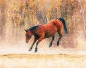 Horses, nature, landscape, horse photography, home decor,office decor