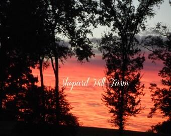Red Sunrise Photograph DIGITAL Download Primitive Country Rural Trees Background Art Crafts Landscape COMMERCIAL LICENSE