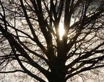 Fine Art Photography Print - Silhouette of Tree