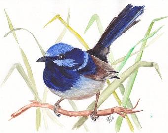 Original Blue Wren Watercolour Painting