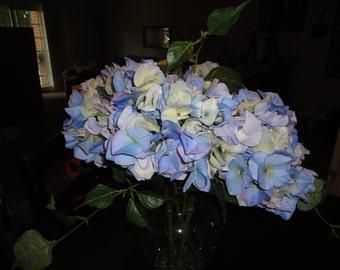 Beautiful Blue Hydranges