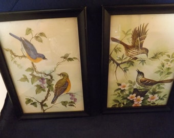 Two Framed Bird Pictures