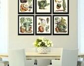 Botanical Vegetable Print Set of 6 Art  Redoute Antique Beautiful Pumpkin Cabbage Illustration Kitchen Dining Room Garden Wall Decor