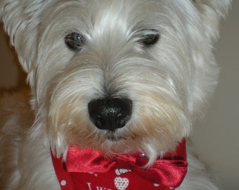 I woof You Valentines Harness
