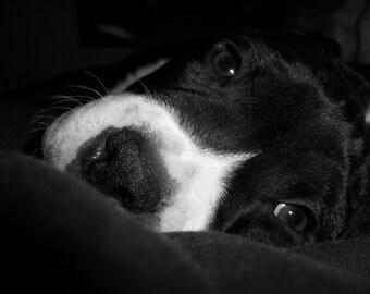 Good Morning Puppy Print/Original Photography