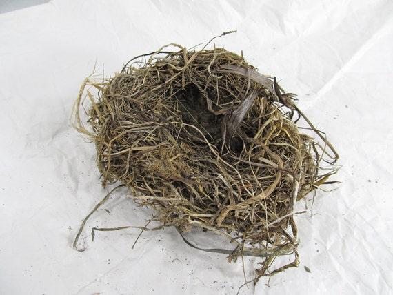 Real Birds Nest; Twigs, Bark, Grass. Crafts, Display or Education. OOAK Real Natural Nest Blackbird Rustic Woodland Craft (nest 5)