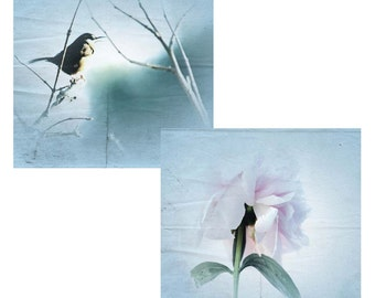 Pair 8x10's, Shabby Chic Bird Photo and Pale Pink Peony Photo with Textured Soft Blue Backgrounds