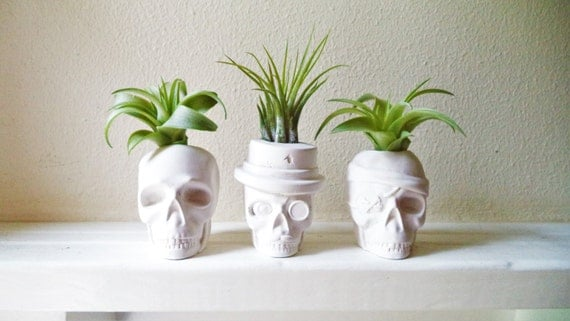 Skull planters, mini air plant skull planter, top hat skull, pirate skull, monocle, mustache