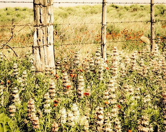 Landscape Photography, wildflowers, roadside flowers, fence posts, red, pink, green, Rustic Home Decor, Fine Art Print