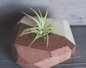 Large Geo Air Plant Holder - Natural Wood with Side Painted (Includes Air Plant)