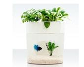 A Dialogue Between Flowers and Fish Aquarium Planter, fish tank, plant, green, decor, gift, Aquaponics, creative, housewares
