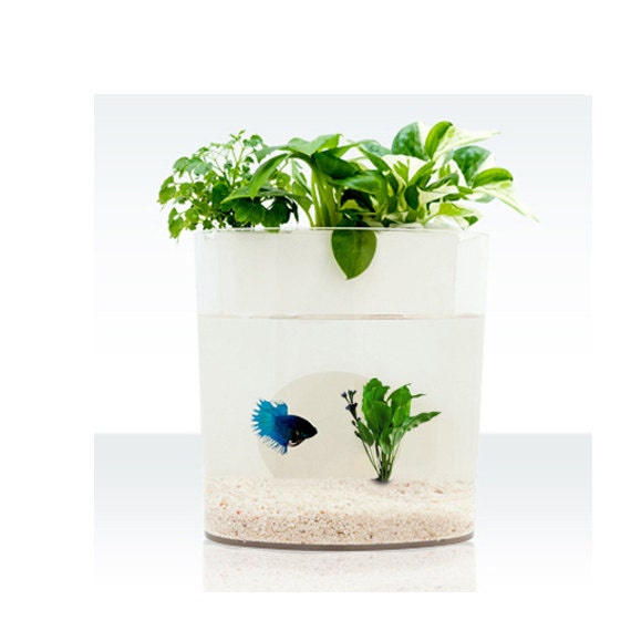 A Dialogue Between Flowers and Fish Aquarium Planter, fish tank, plant, green, decor, gift, Aquaponics, creative, housewares