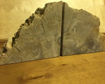 petrifed wood bookends