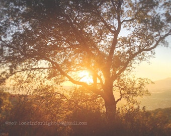 Tree Photography, Golden Tree Art, Sunset Light Photo, Tree Light photo art, Sunlight and Woodlands Photo, Live Oak Tree, Trabuco Canyon, CA