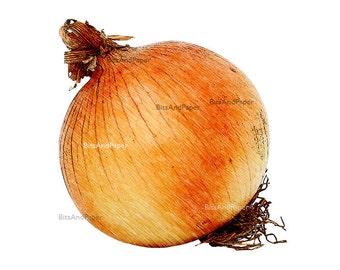 Vegetable art, onion print, 8x10 vegetable illustration, food illustration, retro digital image, kitchen decor, food print, vintage drawing