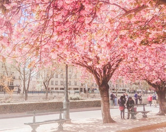 Paris Photograph, Spring in Paris, Underneath the Cherry Blossoms, Pink Paris Wall Art, Cherry Blossom Paris Photo, April in Paris