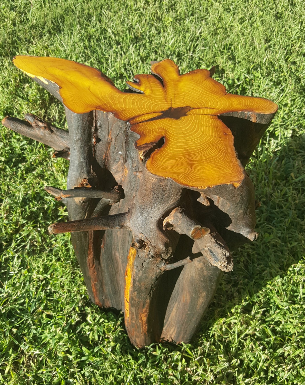 Custom Osage Orange Stump Stool End Table Nightstand One Of