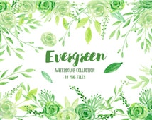 Watercolor clipart  Evergreen -green leaves, green flowers and floral arrangments for instant download