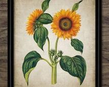Sunflower Print - Sunflower Art Decor - Yellow Flower Illustration - Digital Art - Printable Art - Single Print #218 - INSTANT DOWNLOAD