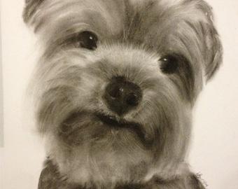 Custom Pet Portrait Charcoal Drawing 9x12