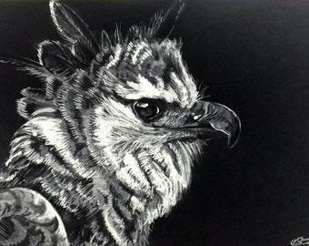 Monochrome Harpy Eagle - Original A4 Wall Art!
