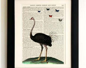 ART PRINT on old antique book page - Big Ostrich, Butterflies, Vintage Upcycled Wall Art Print Encyclopaedia Dictionary Page, Fab Gift!