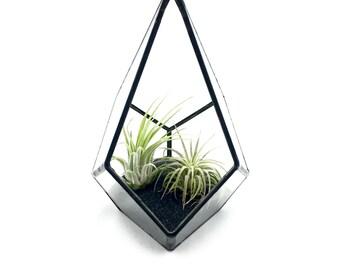 "Air Plant Terrarium Kit - Geometric ""Teardrop"" with Black Sand"