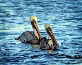 Pelican Brown Pelican Florida Birds Water Birds Wildlife Photography Wall Art