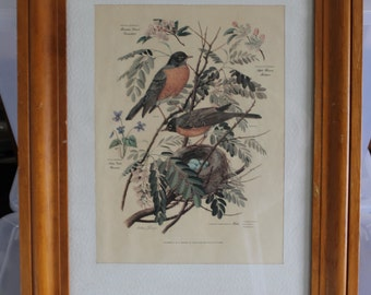 HALF SALE SIGNED Painting 5 of a Series of 7, by Arthur Singer, Honored by The Audubon Society, Male, Femal Robins, w Latin Names & States