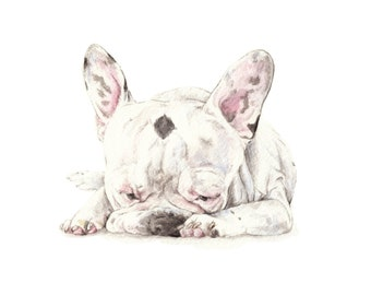 French Bulldog Black and White Limited Edition Print 8.5x11 Watercolor Frenchie Sleepy Puppy