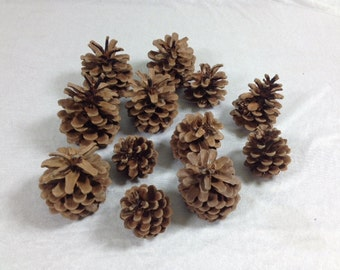 12 Pine Cones Set Of 12 Pine Cones Brown Woodland Crafts Pine Cone Crafts Natural Pine Cones