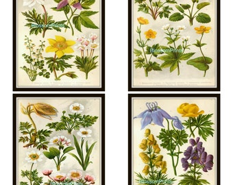 Set of four Flora Flower Prints vintage prints from the 1800's