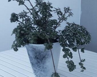 Vase for outdoor/outdoor Pot.