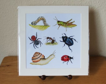 Invertebrates Mounted Print, Insects Large Square Artwork, Nature, Wildlife, Beetles, Bugs Design, Ready for Framing (Frame not supplied).