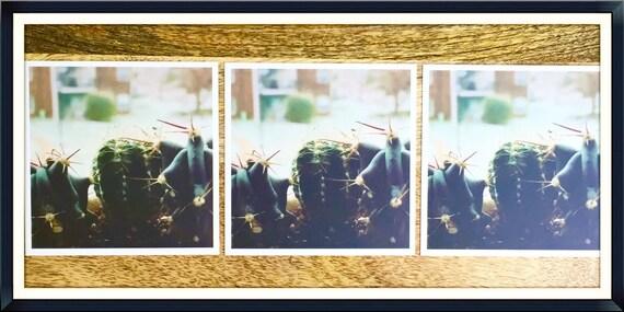 Cactus Photography, 3 Cactus Print Set, Set of 3 Cacus Prints, Home decor, Botanical Art, Garden Wall Art, Garden Photo