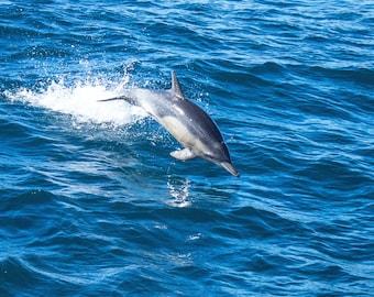 Beach Digital Download Photography Instant Download Dolphin Fine Art Photography Nature Photography Ocean Photography Coastal Art