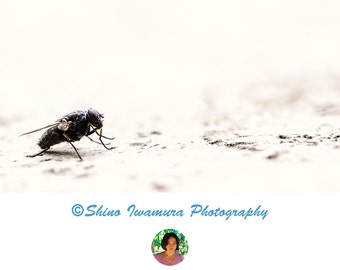 Insect Photography Insect Print - Fly Print Insect Art Insect Artwork Macro Photography Insect Printable Instant Download