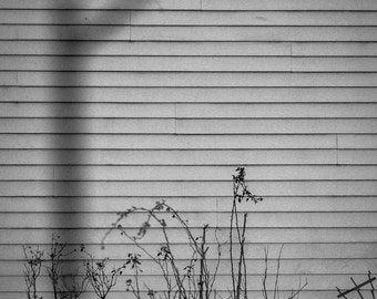 Black and White Lamppost Shadow Photograph Monochrome Suburbia Impression Picture Neighborhood Ghost Image
