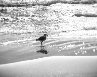 Nature photography - a seagull in the surf