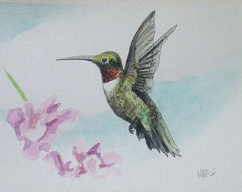 Broad Tailed Hummingbird Pen and Ink Watercolor Painting