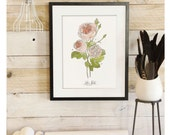 Rose Study - Botanical Scientific Illustration. Beautifully textured cotton canvas art print. Order as an 8x10 11x14 or 16x20 size. Vol.1