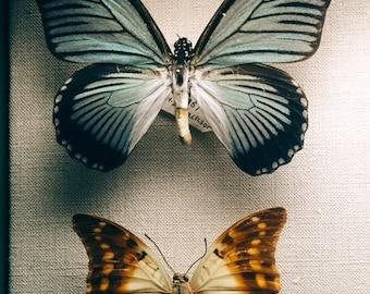 2 butterflies photograph 5x7