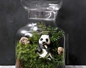 Giant Panda Bear Terrarium with Live Moss Plants