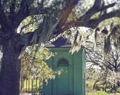 "Louisiana  Photograph. New Orleans ""Sunshine in City Park"". Affordable Home Decor, Wall Art. Oak Tree, Green, Landscape."
