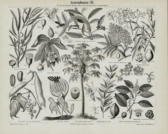 1889 Medicinal plants, Antique print. Botanical, herbs and fruits
