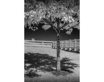 Wood White Fence with Tree in Infrared at the Country Dairy Farm Store, Deli and Visitor Center near Shelby Michigan No.IR192 Photograph
