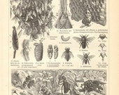 1903 Bees and Bee Hives Original Antique Engraving